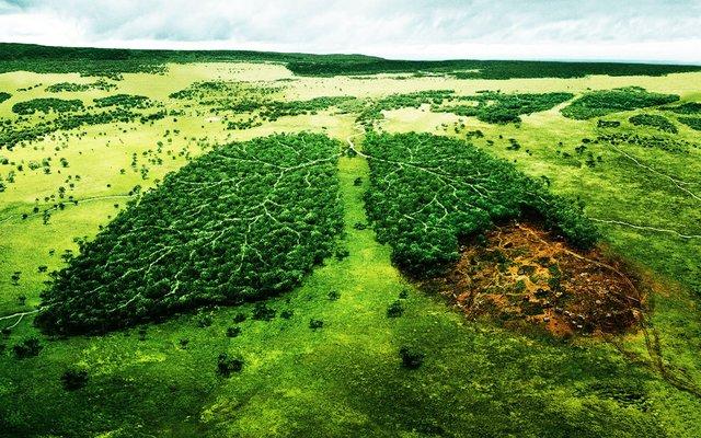 môi trường hiện nay